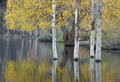 ronald, saunders, bodie, digital, fine art, ronald j, lundy, lake, lee ving,falls, water, creek, saunders,willow, photo