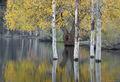 ronald, saunders, bodie, digital, fine art, ronald j, lundy, lake, lee ving,falls, water, creek, saunders,willow, photo