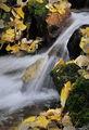 ronald, saunders, bodie, digital, fine art, ronald j, lundy, lake, lee ving,falls, water, creek, saunders, photography,B