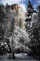 yosemite, el capitan, tree, snow, winter, ronald, saunders, ron,color