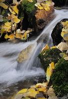 Spirit of the Stream