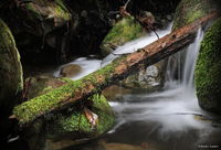 water, redwood, moss, water, falls, california, green