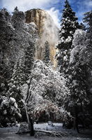 yosemite, el capitan, tree, snow, winter, ronald, saunders, ron,color