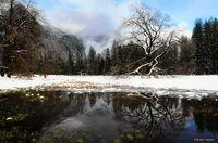 yosemite, meadows, pond, winter, reflection, color