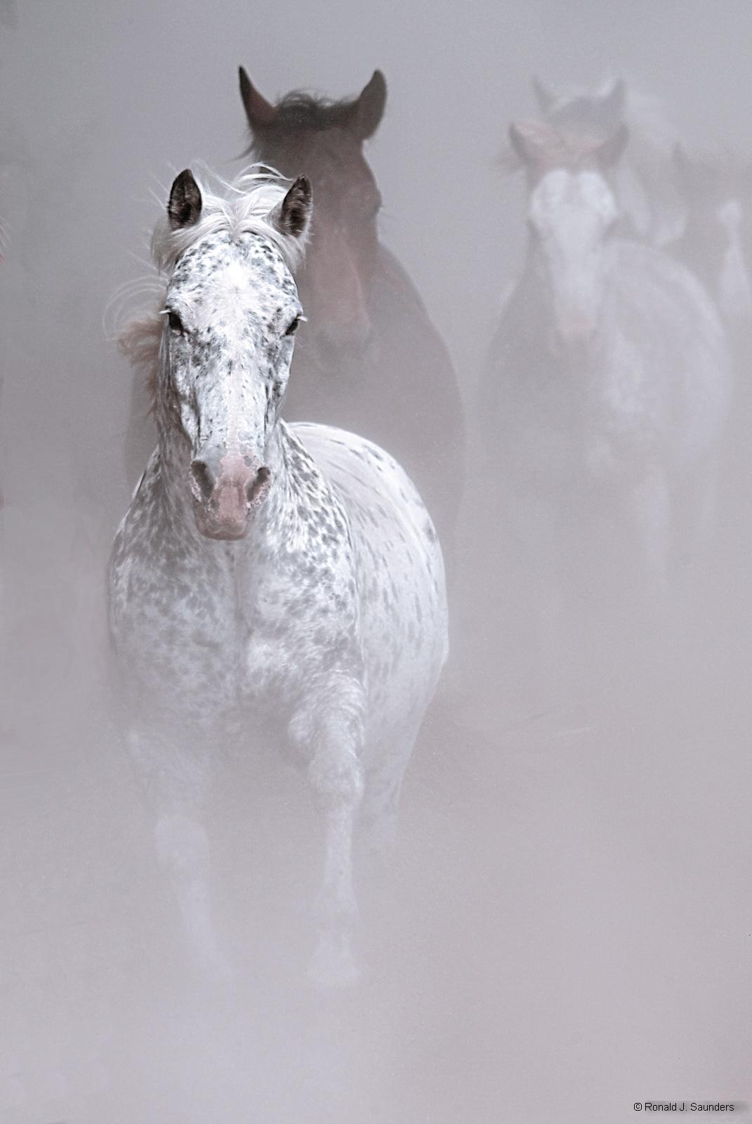 horses, running, michigan, animals,  ron, ron saunders, ronald, ronald j saunders, prints, photo