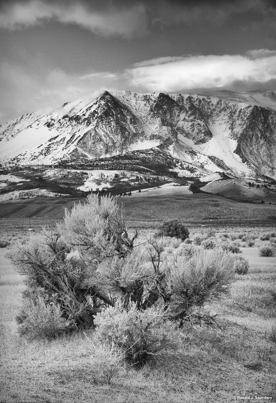 Mt Gibbs, ansel, adams, sexton, cramer, sierra, mountain, black, white, sage, pumice, photo