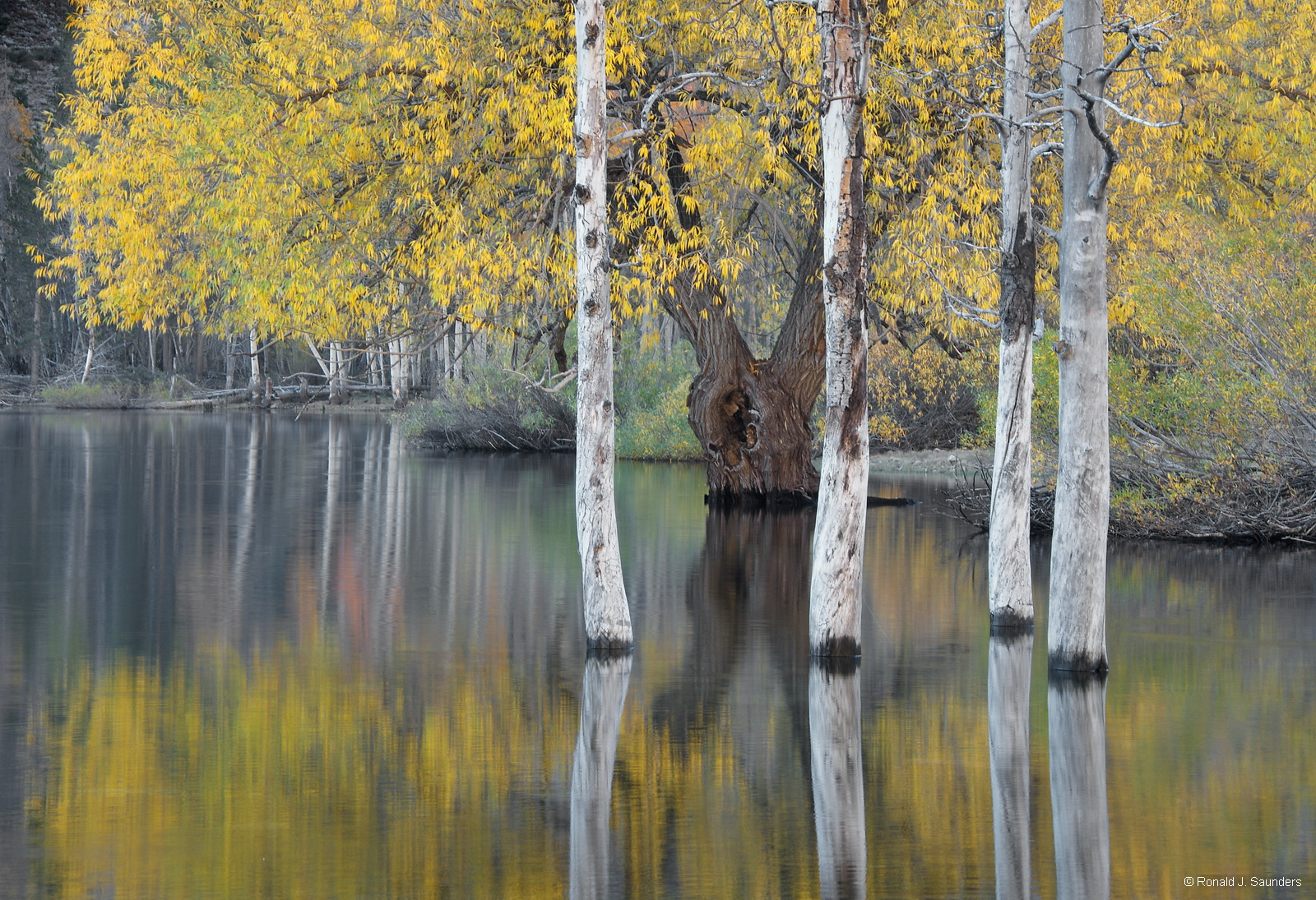 ronald, saunders, bodie, digital, fine art, ronald j, lundy, lake, lee ving,falls, water, creek, saunders,willow, photo, photo