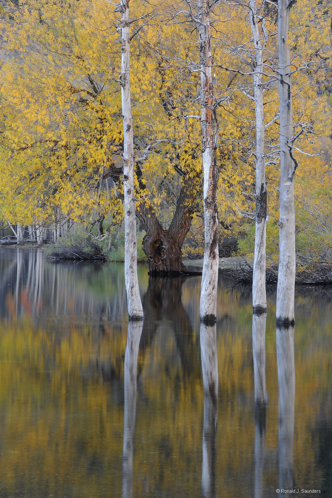 This vertical image also has a cousin in a horizontal format. Taken on a nice crisp October morning in 2011.