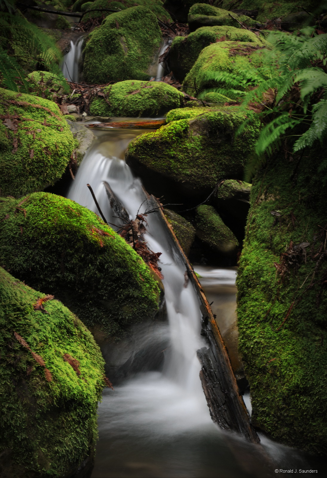 redwoods, california, falls, water, moss, rocks, stream, ferns, ron, ron saunders, ronald, ronald j saunders, prints, photo