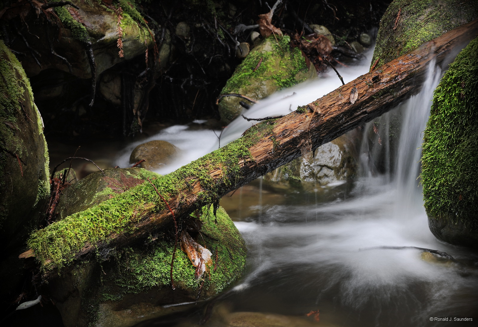 water, redwood, moss, water, falls, california, green, photo