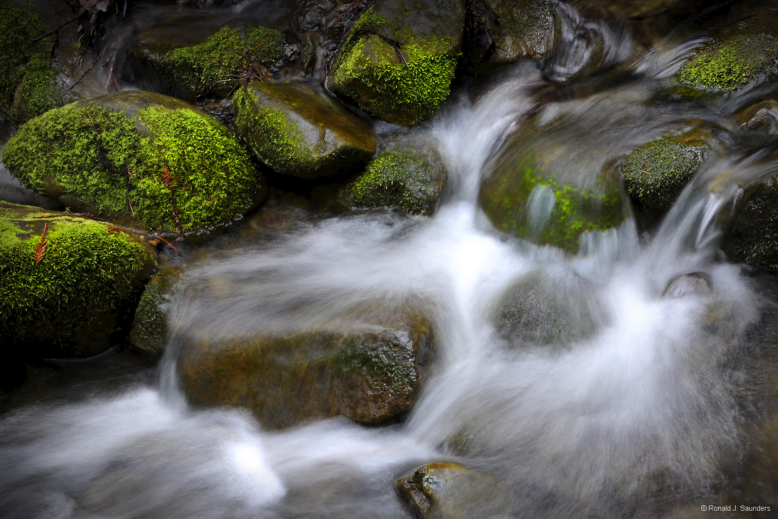 redwoods, stream, moss, california, stream, falls, photo