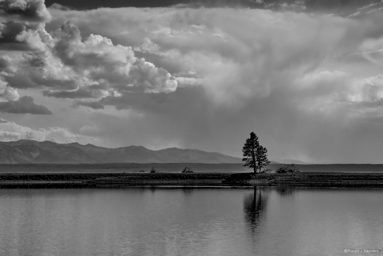 yellowstone, pine, tree, water, lake,clouds B&W, photo