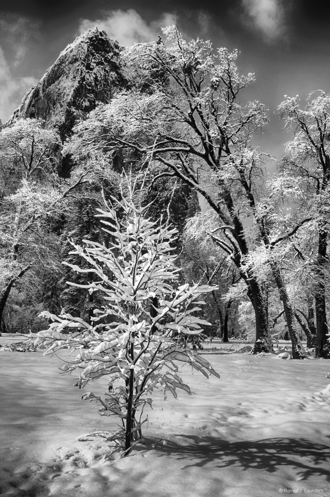 yosemite, black, white, ron, ronald, saunders, snow, winter,valley, view, landscape, fine art, keeble, shuchat, exhibition, clearing, weather, national, park, photo