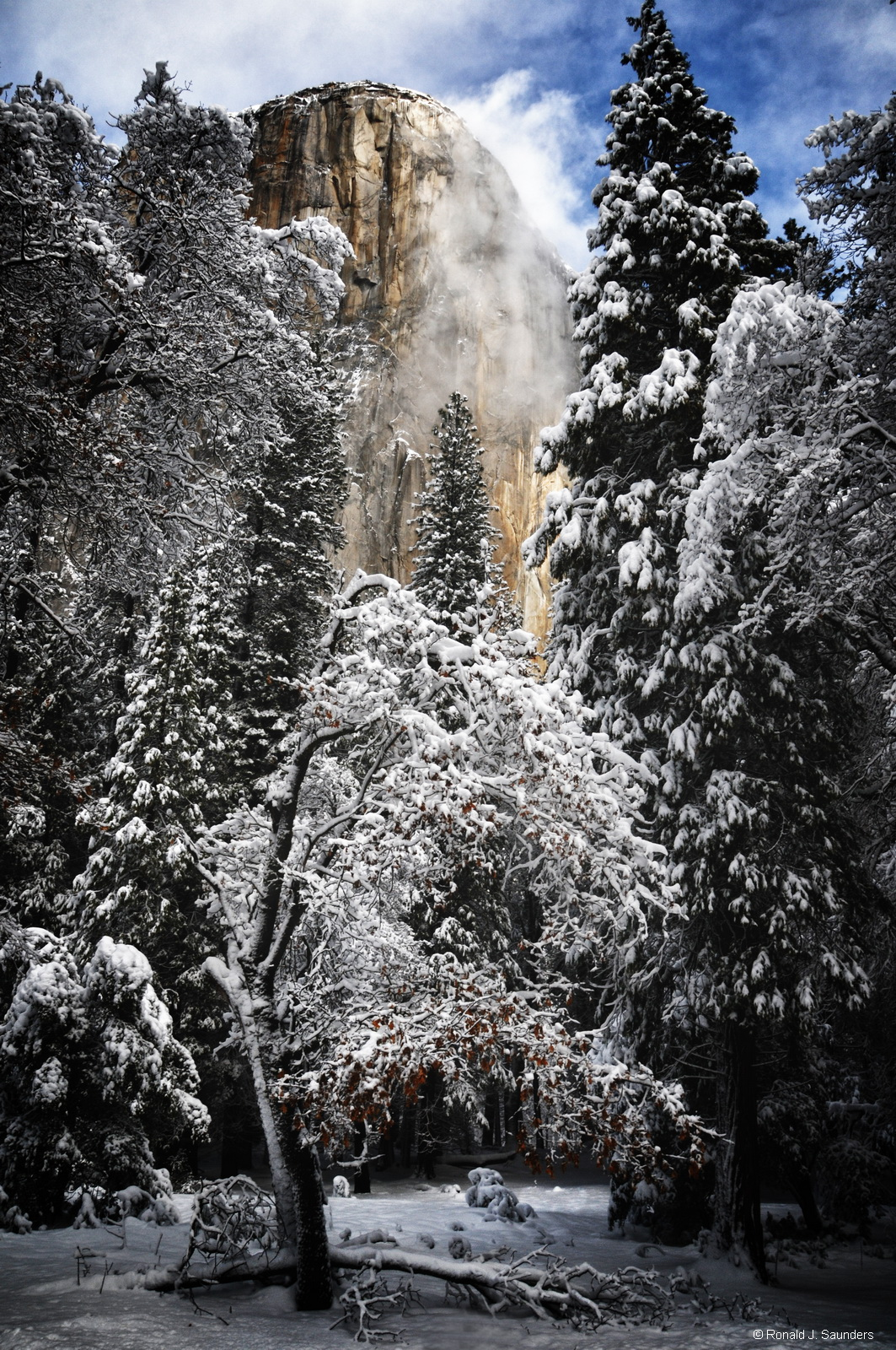 yosemite, el capitan, tree, snow, winter, ronald, saunders, ron,color, photo